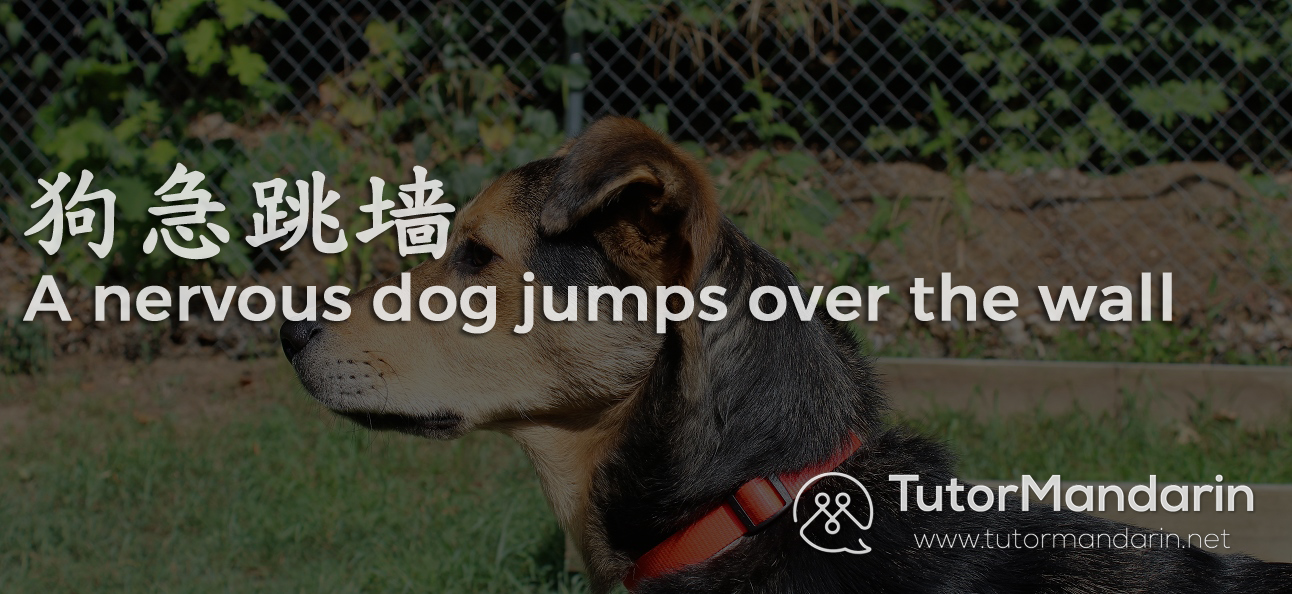Chinese Chengyu dog wall