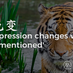 One's Express Changes when Tiger is mentioned - BLOG