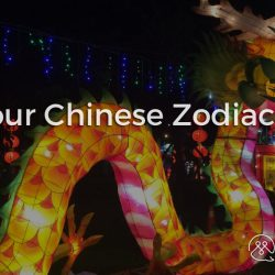 Understanding China - PART 02 - Know your Chinese Zodiac Animals - Blog