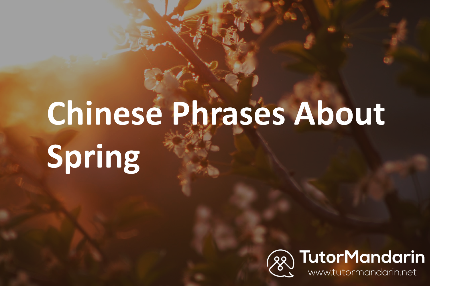 Chinese Phrases About Spring with Tutormandarin 1-on-1 online lessons
