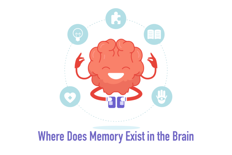 Chinese & Where Does Memory Exist in the Brain?
